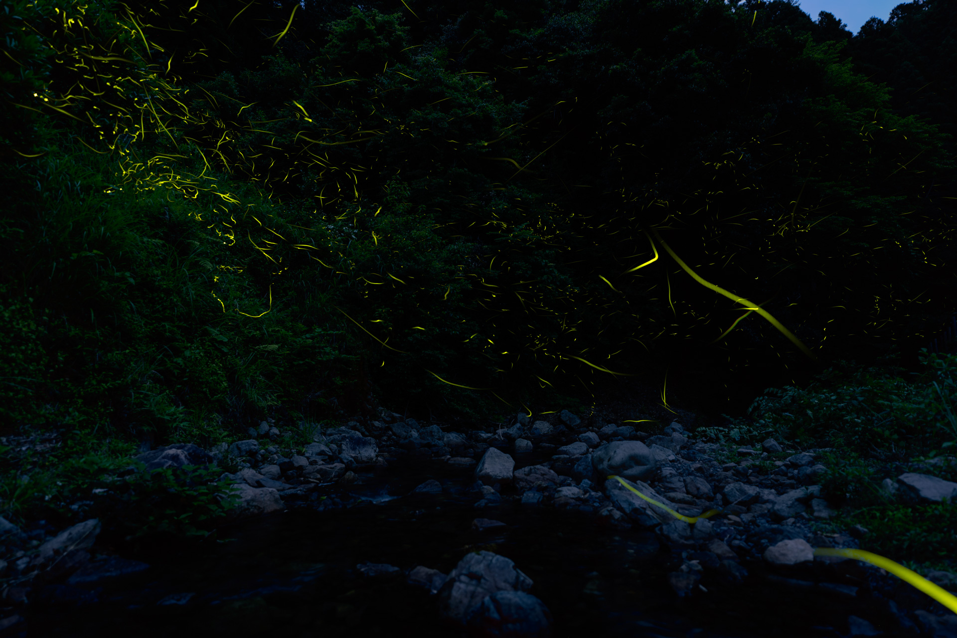 firefly02
